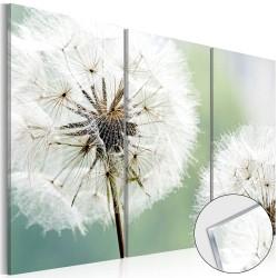 Artgeist billede - Fluffy Dandelions, plexiglas 120x80