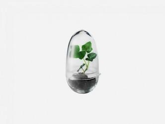 Grow Green House