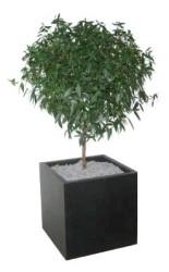 Gummi urtepotte (12x12)