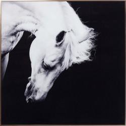 Kare Design Billede, Frame Alu Proud Horse 100 x 100 cm