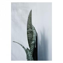 Kristina Dam Bayonet Plant I Plakat