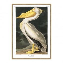 The Dybdahl Co. American White Pelikan Plakat