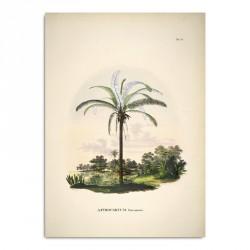 The Dybdahl Co. Astrocaryum Murumurú Plakat