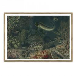 The Dybdahl Co. Deep Sea Fauna Plakat