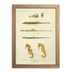 The Dybdahl Co. Fishes Mini Print #RC031
