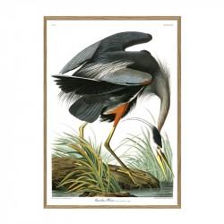 The Dybdahl Co. Great Blue Heron Plakat