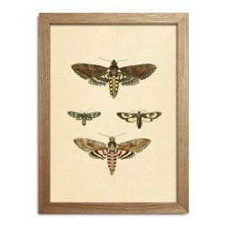 The Dybdahl Co. Insects Mini Print #RC005