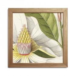 The Dybdahl Co. Plants Mini Print #SQ034