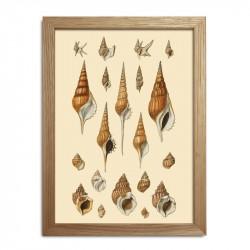 The Dybdahl Co. Sea Shells #RC047