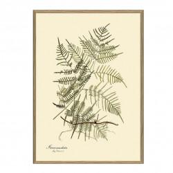 The Dybdahl Co. Steris Caudata Plant Poster