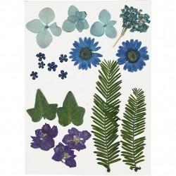 Tørrede Blomster og blade, blå. 19 ass